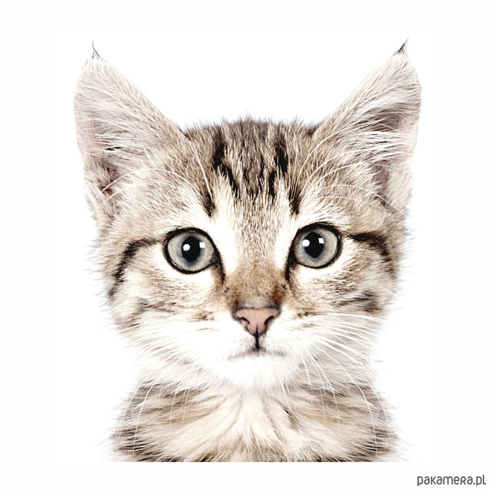 Kot Naklejka Na ścianę Dla Dzieci Dziecko Tapety I Naklejki